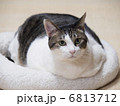 猫ベッドに入った猫 6813712