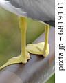 黄色い水かき  6819131