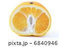 八朔 柑橘 ハッサクの写真 6840946
