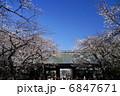 靖国神社 さくら 花の写真 6847671