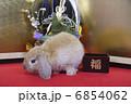 門松と金屏風でウサギのお正月 6854062