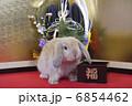 門松と金屏風でウサギのお正月 6854462
