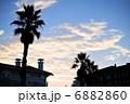 椰子の木 パームツリー ヤシの木の写真 6882860