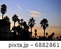 椰子の木 パームツリー ヤシの木の写真 6882861
