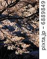ヤマザクラ 山桜 桜の写真 6889849