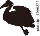 鳥 6900272