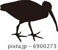 鳥 6900273