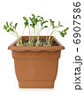 Pot with green seedlings on white 6907586