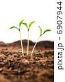 芽生え 発芽 苗の写真 6907944