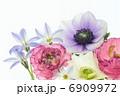 アネモネとラナンキュラスと花韮のアレンジメント 6909972