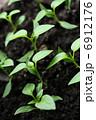 双葉 芽生え 新芽の写真 6912176