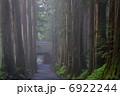 参道 戸隠神社 杉並木の写真 6922244