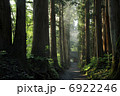 参道 戸隠神社 杉並木の写真 6922246