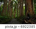 戸隠神社 参道 杉並木の写真 6922385