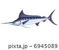 カジキ マカジキ 真梶木のイラスト 6945089
