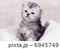 かわいい猫 6945749