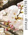 さくら 花 桜の写真 6954798