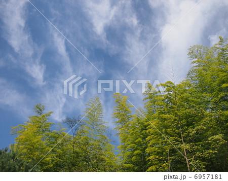 竹林と流れる雲 6957181