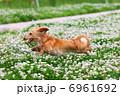 跳ぶ 走る 犬の写真 6961692