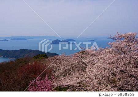 紫雲出山の桜 6968858