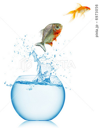 goldfish jumping out of the water の写真素材 [6973056] - PIXTA
