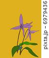 片栗の花 カタカゴ カタクリの花のイラスト 6979436