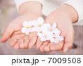 花 桜 ソメイヨシノの写真 7009508