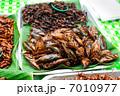 セミ 昆虫 蟲の写真 7010977