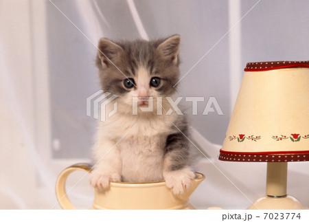 窓辺の仔猫の写真素材 [7023774] - PIXTA