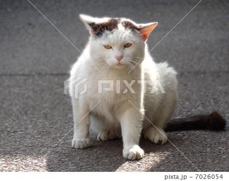 寝起き猫 7026054