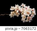 桜 7063172