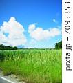 サトウキビ畑と青空  7095353