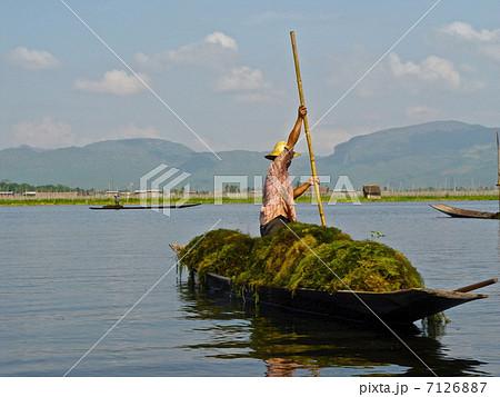 水草採り(インレー湖/ミャンマー) 7126887