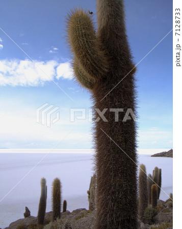 ウユニ塩湖 7128733