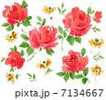 水彩 薔薇 花のイラスト 7134667