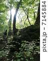 森 7145884