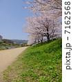 賀茂川 川沿い 桜の写真 7162568