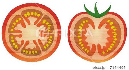 水彩風トマトの断面のイラスト素材