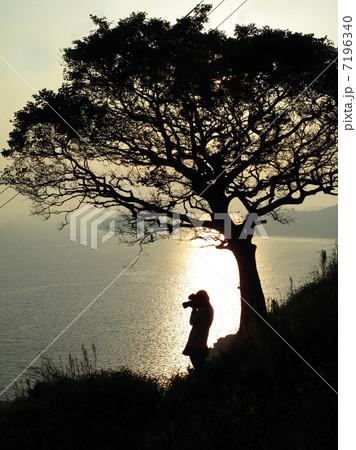 夕暮れ 棚田を撮影する女性 7196340