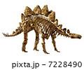 Stegosaur Bone☆ステゴサウルス 7228490