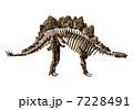 Stegosaur Bone☆ステゴサウルス 7228491