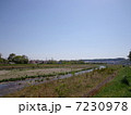 土手 浅川 雑草の写真 7230978