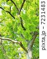 樹木 新緑 木の写真 7231483