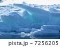 流氷 7256205