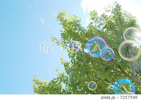 シャボン玉と木 7257500