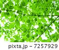 木漏れ日の風景 7257929