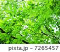 木漏れ日の風景 7265457