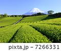 茶畑 山 新緑の写真 7266331