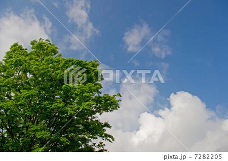 写真素材: 沸き立つ雲と新緑(背景素材)