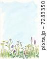 野の花 7283350